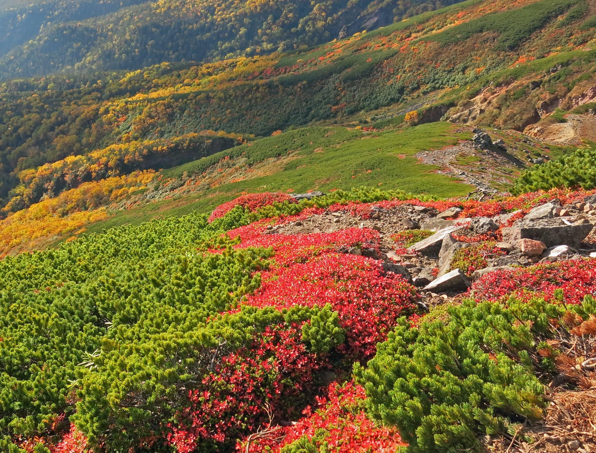 標高の高い山ではそろそろ紅葉が始まる季節ですね!