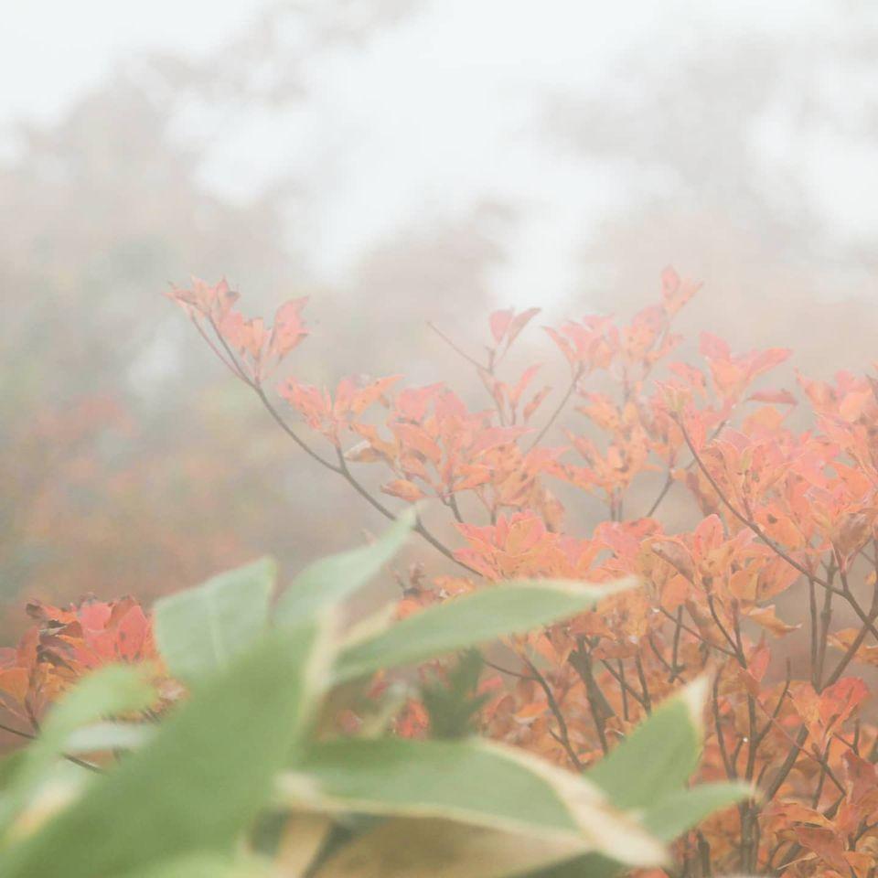 谷川岳馬蹄形縦走を日帰りで行ってきました(vol.1)