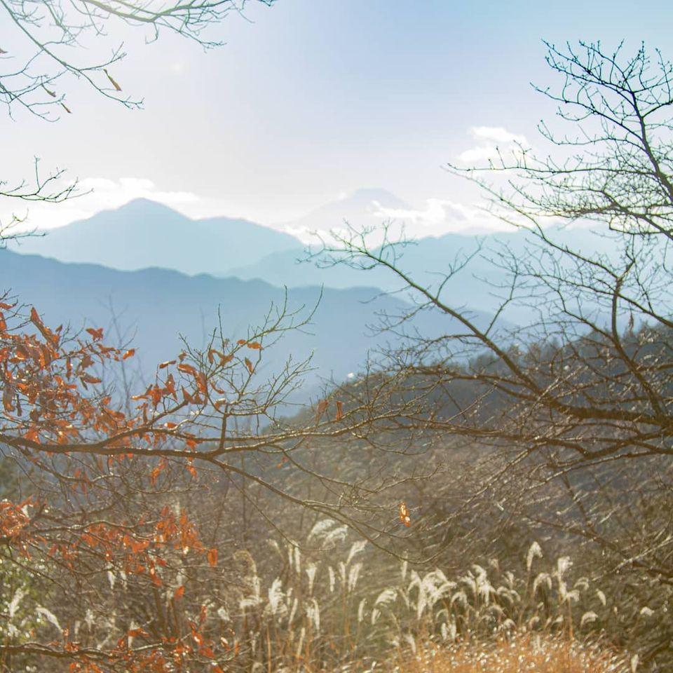 天気がよかったので高尾山をふらっと歩いて来ました