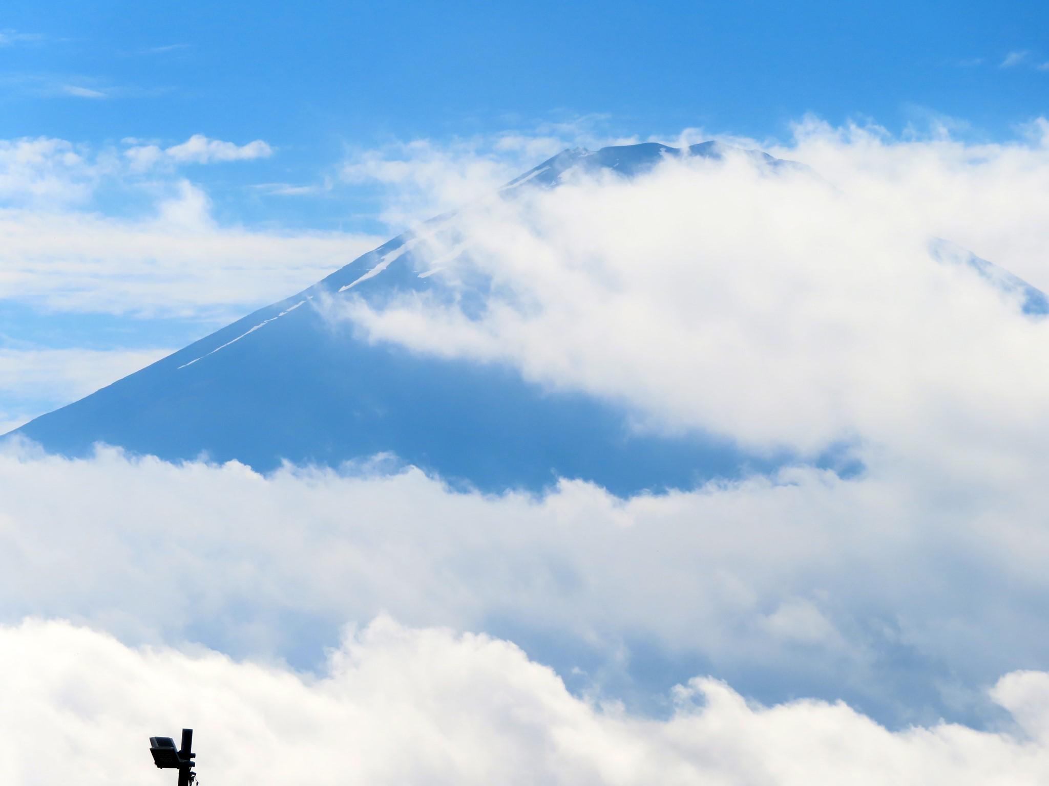 6/6(日)、花と温泉トレッキング教室にて神奈川県金時山に行ってきました