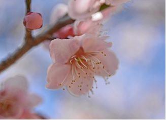 2020年2月23日 yama楽2月23日 長瀞アルプス/宝登山に行ってきました♪