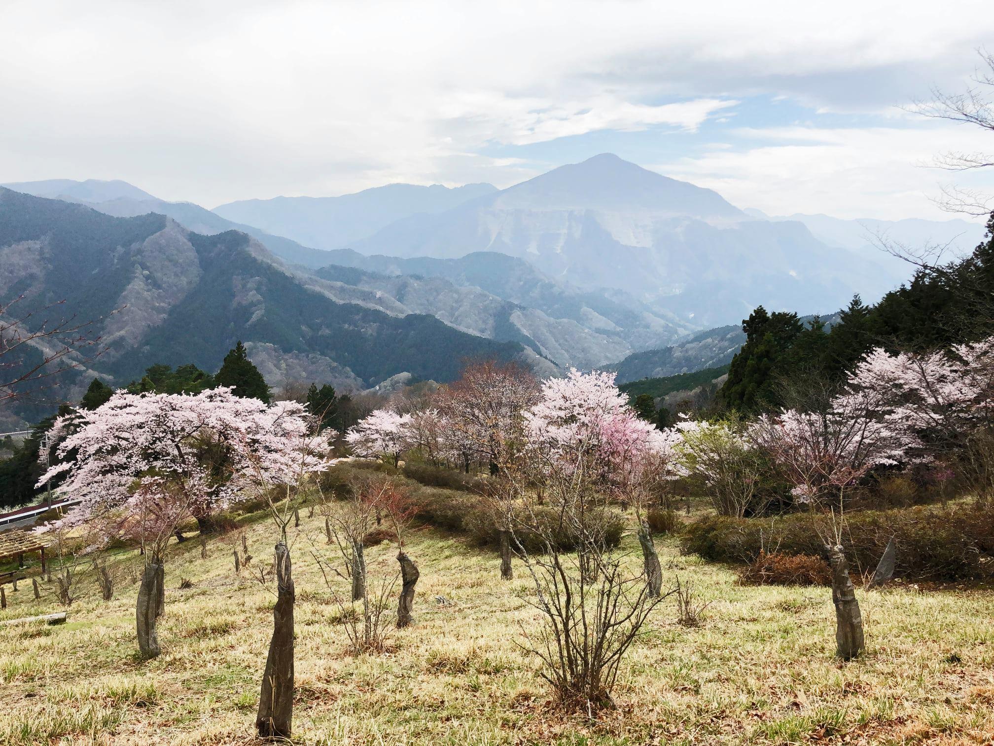 4月4日yama楽 埼玉県芦ヶ久保/日向山