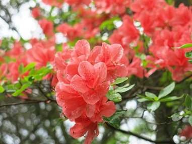 ✿2021年6月6日 花と温泉トレッキングで金時山に行ってきました♪