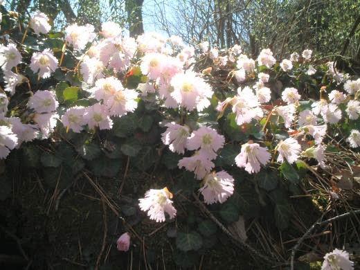 2021.5.9 花と温泉トレッキング《坪山》(H5)